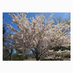 Cherry Blossoms Tree Glasses Cloth (Large, Two Sided)