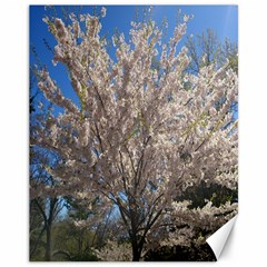 Cherry Blossoms Tree Canvas 11  X 14  (unframed)