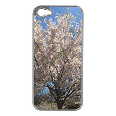 Cherry Blossoms Tree Apple Iphone 5 Case (silver)