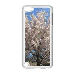 Cherry Blossoms Tree Apple iPod Touch 5 Case (White)