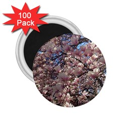 Sakura 2.25  Button Magnet (100 pack)
