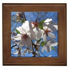 Cherry Blossoms Framed Ceramic Tile