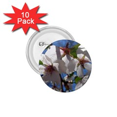 Cherry Blossoms 1.75  Button (10 pack)