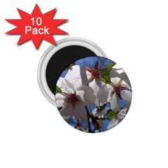 Cherry Blossoms 1.75  Button Magnet (10 pack)