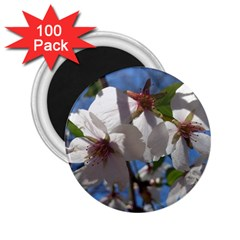 Cherry Blossoms 2 25  Button Magnet (100 Pack)