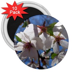 Cherry Blossoms 3  Button Magnet (10 Pack)