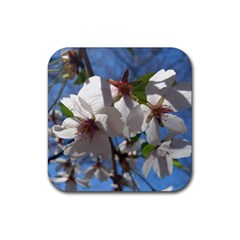 Cherry Blossoms Drink Coaster (Square)