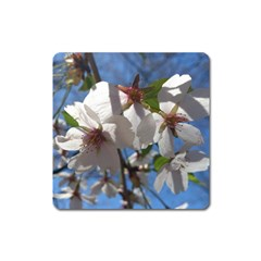 Cherry Blossoms Magnet (square)