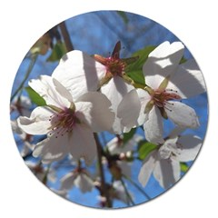 Cherry Blossoms Magnet 5  (round)