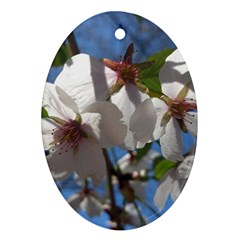 Cherry Blossoms Oval Ornament (two Sides)
