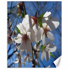 Cherry Blossoms Canvas 16  X 20  (unframed)