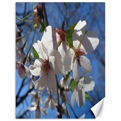 Cherry Blossoms Canvas 18  x 24  (Unframed)