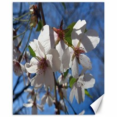 Cherry Blossoms Canvas 11  X 14  (unframed)