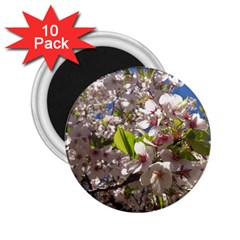 Cherry Blossoms 2.25  Button Magnet (10 pack)