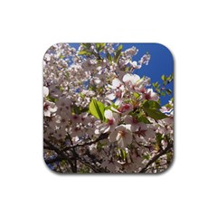 Cherry Blossoms Drink Coasters 4 Pack (square)