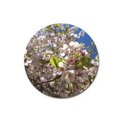 Cherry Blossoms Magnet 3  (Round)