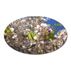 Cherry Blossoms Magnet (Oval)