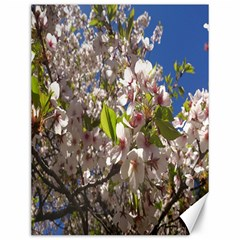 Cherry Blossoms Canvas 12  x 16  (Unframed)