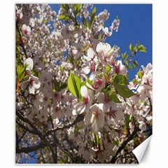 Cherry Blossoms Canvas 20  X 24  (unframed)