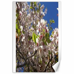 Cherry Blossoms Canvas 20  x 30  (Unframed)