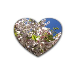 Cherry Blossoms Drink Coasters 4 Pack (Heart)