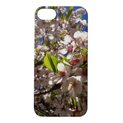 Cherry Blossoms Apple Iphone 5s Hardshell Case