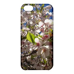 Cherry Blossoms Apple iPhone 5C Hardshell Case