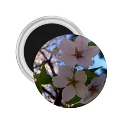 Sakura 2.25  Button Magnet