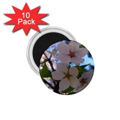 Sakura 1.75  Button Magnet (10 pack)