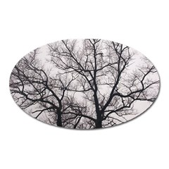 Tree Magnet (Oval)
