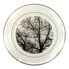 Tree Porcelain Display Plate