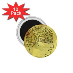 Brain Map 1 75  Button Magnet (10 Pack)