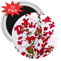 Red Petals 3  Button Magnet (10 Pack)