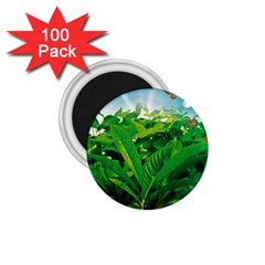 Nature Day 1.75  Button Magnet (100 pack)