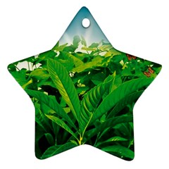 Nature Day Star Ornament (Two Sides)