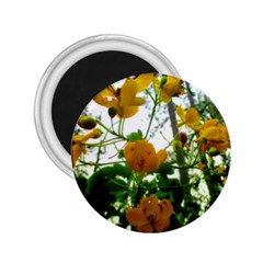 Yellow Flowers 2 25  Button Magnet