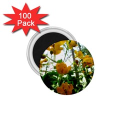 Yellow Flowers 1 75  Button Magnet (100 Pack)