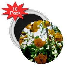 Yellow Flowers 2.25  Button Magnet (10 pack)