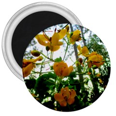 Yellow Flowers 3  Button Magnet