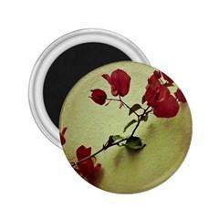 Santa Rita Flower in Warm Colors Wall Photo 2.25  Magnet