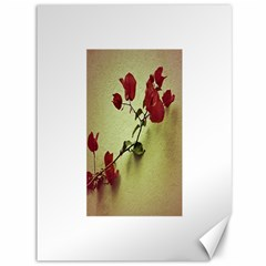 Santa Rita Flower Canvas 36  x 48  (Unframed)