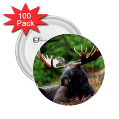 Majestic Moose 2 25  Button (100 Pack)