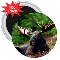 Majestic Moose 3  Button Magnet (100 pack)