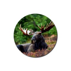 Majestic Moose Drink Coaster (round)