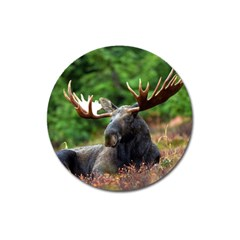 Majestic Moose Magnet 3  (Round)