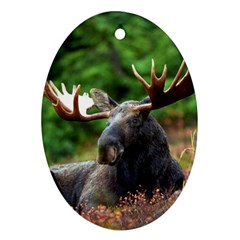 Majestic Moose Oval Ornament (two Sides)