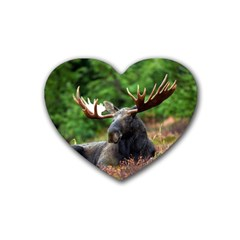 Majestic Moose Drink Coasters 4 Pack (Heart)