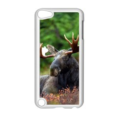 Majestic Moose Apple Ipod Touch 5 Case (white)