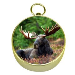 Majestic Moose Gold Compass