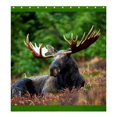 Majestic Moose Shower Curtain 66  x 72  (Large)